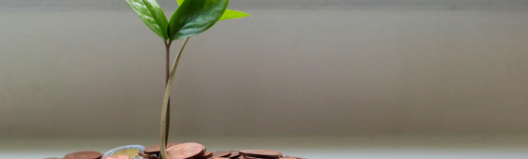 Pile of money coins with a green seedling plant growing from it.