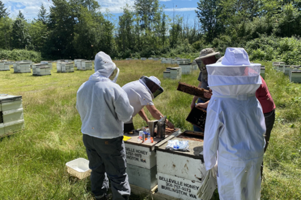 four people inspecting beehives