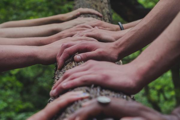 Different skin tones of hands all touching a tree trunk with the angle looking up at the leaves.