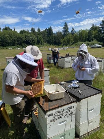 beekeepers inspecting bees by hive