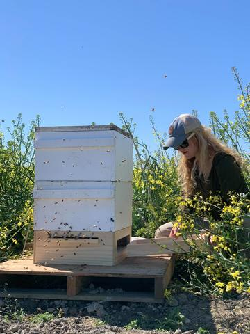field shot hive checks for hive health research