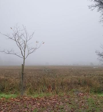 gloomy weather in a field in Oxfordshire, a single tree in the foreground, mist in the distance